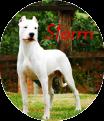 Meet Storm Argent12