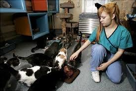 ASPCA Shop/Shelter Untitl10
