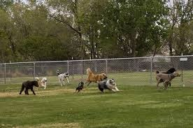 The Dog Park Untitl12