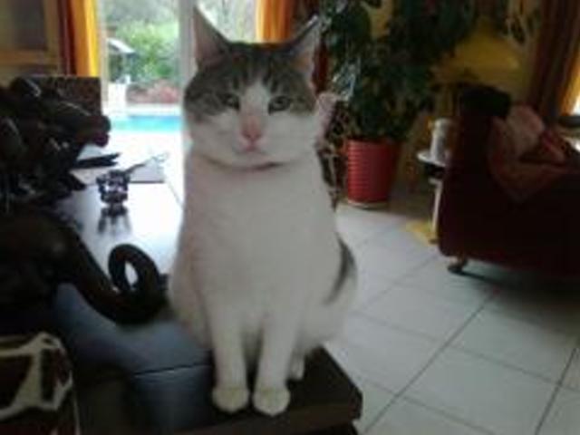 (adopté)URGENT / Ictor chat mâle de 3 ans (13)  Hector10