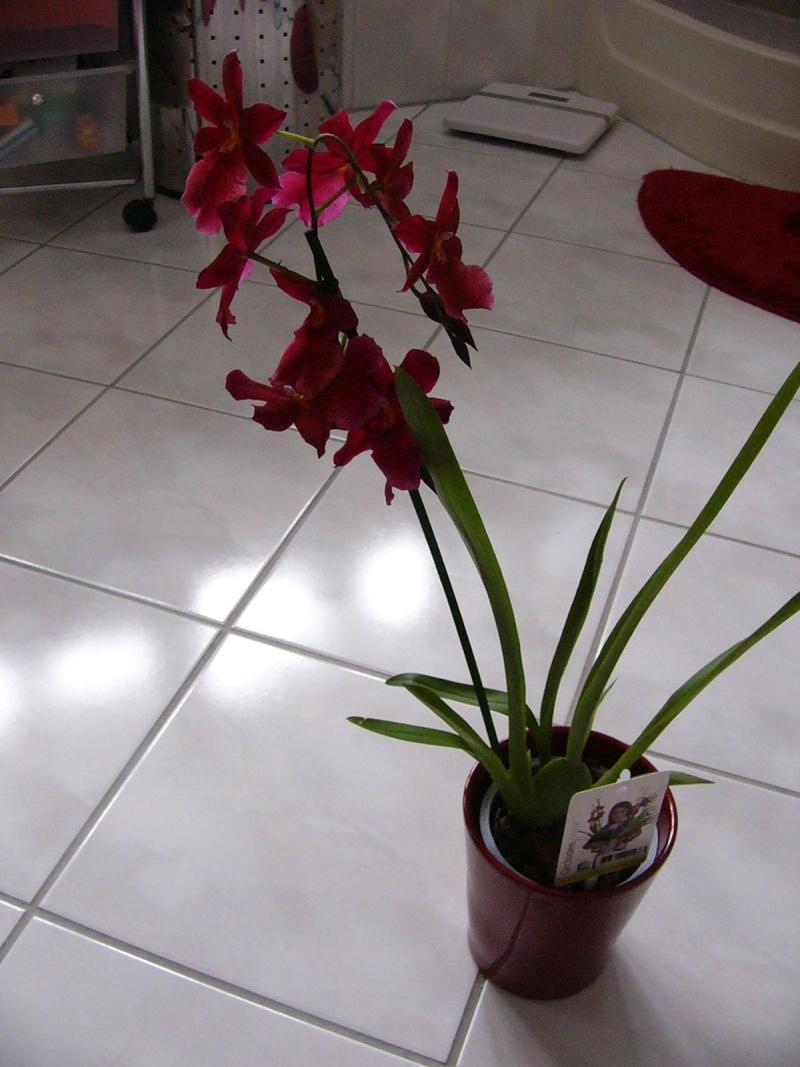 Identifikation blühender Orchideen  ohne  Händlerbenennung Identi10