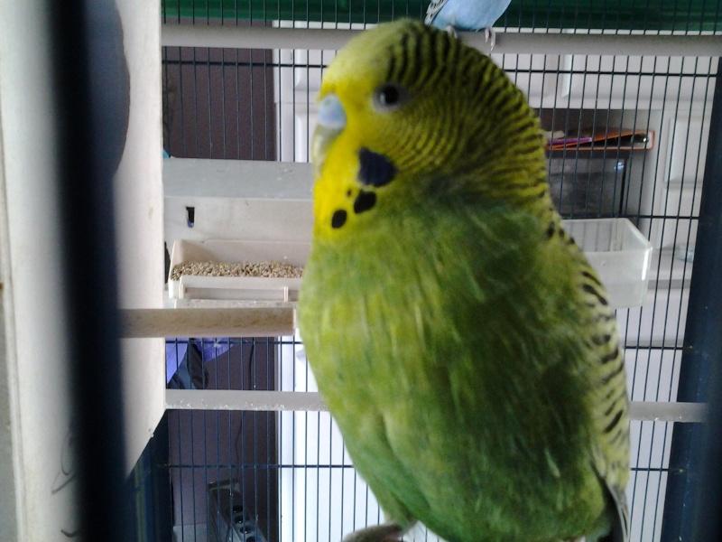 mes oiseaux  20140339