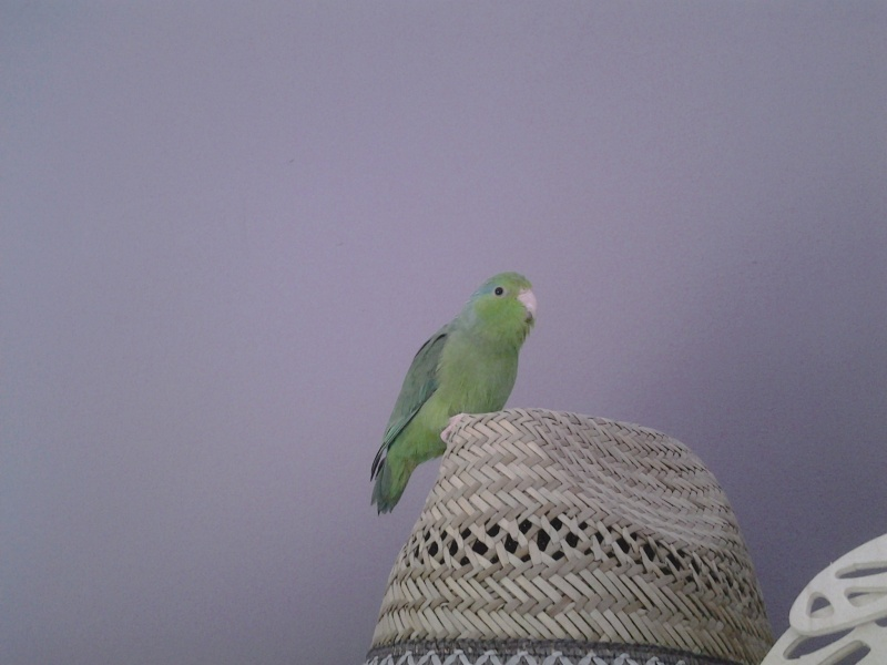 mes oiseaux  20140343