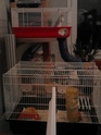 ma cage Img_2026