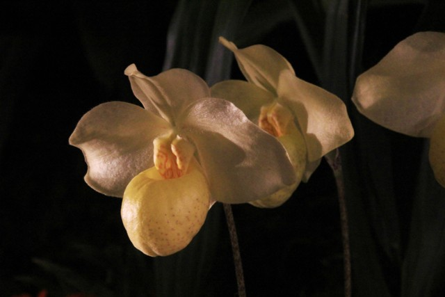 Münchner Orchideenmarkt Planegg Img_0068