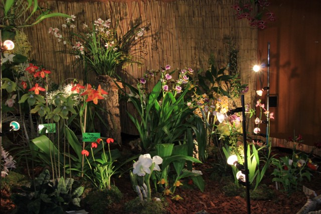Münchner Orchideenmarkt Planegg Img_0072