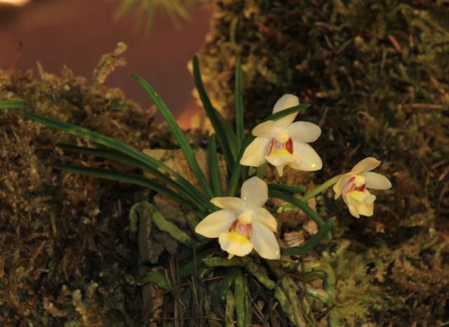 Münchner Orchideenmarkt Planegg Img_0085