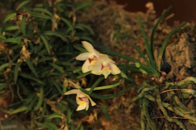 Münchner Orchideenmarkt Planegg Img_0090