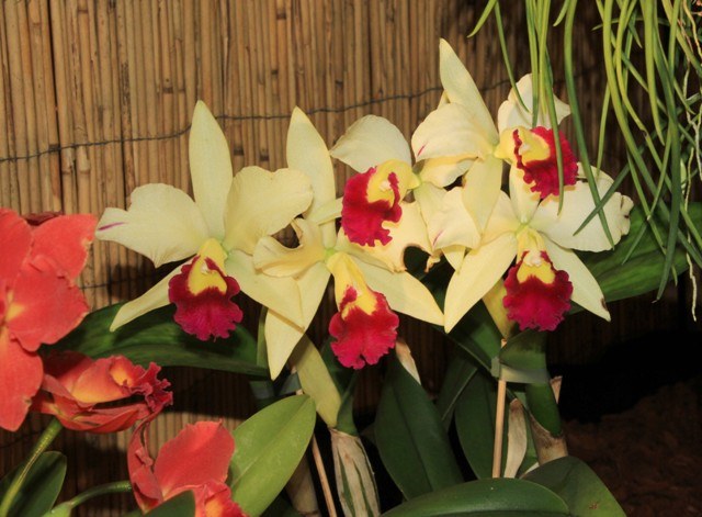 Münchner Orchideenmarkt Planegg Img_0108