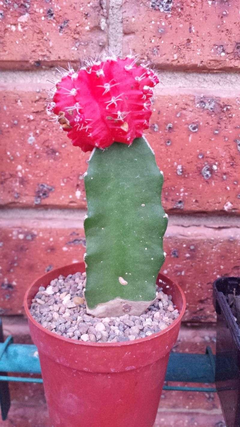 Cacti rescue!  Image18