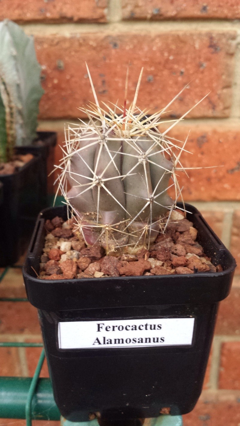Random Cacti Photo Thread Image32