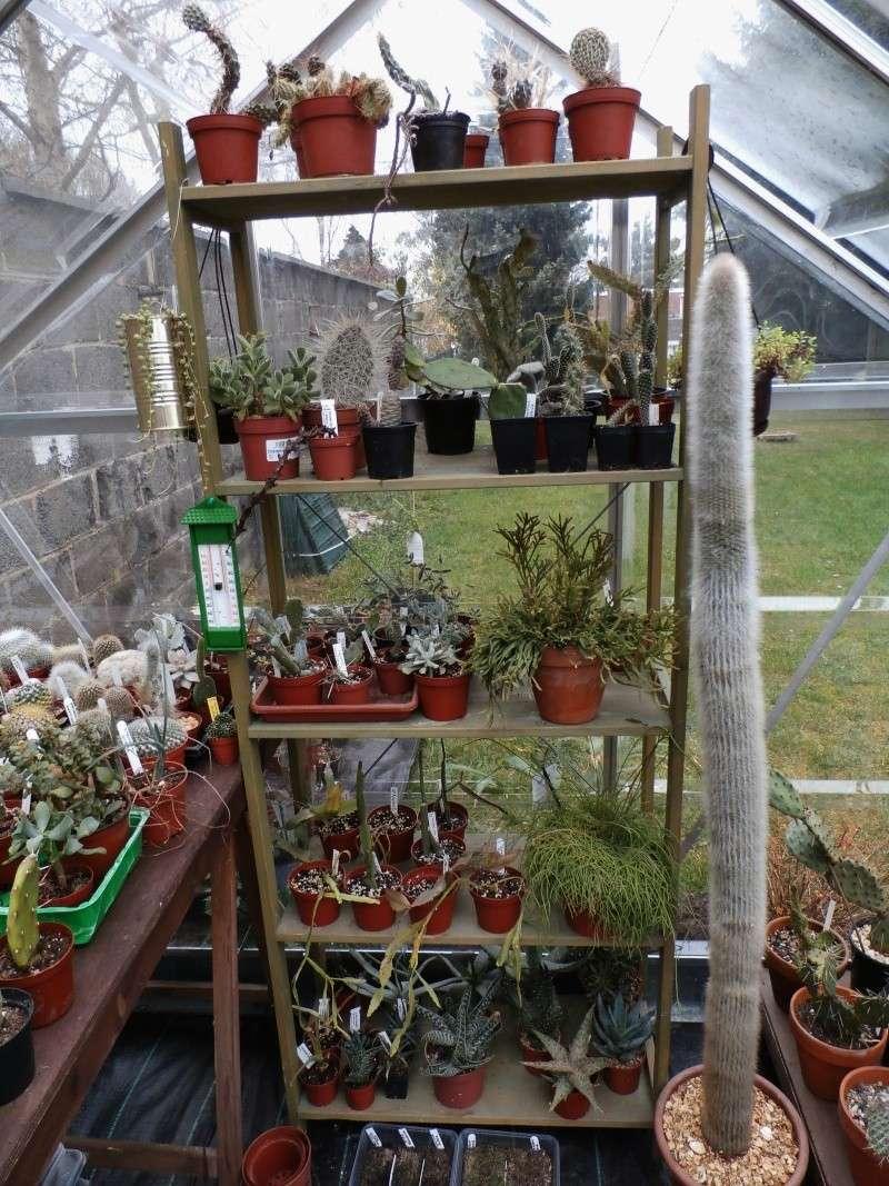 Phyllo - nouveau jardin P3170010