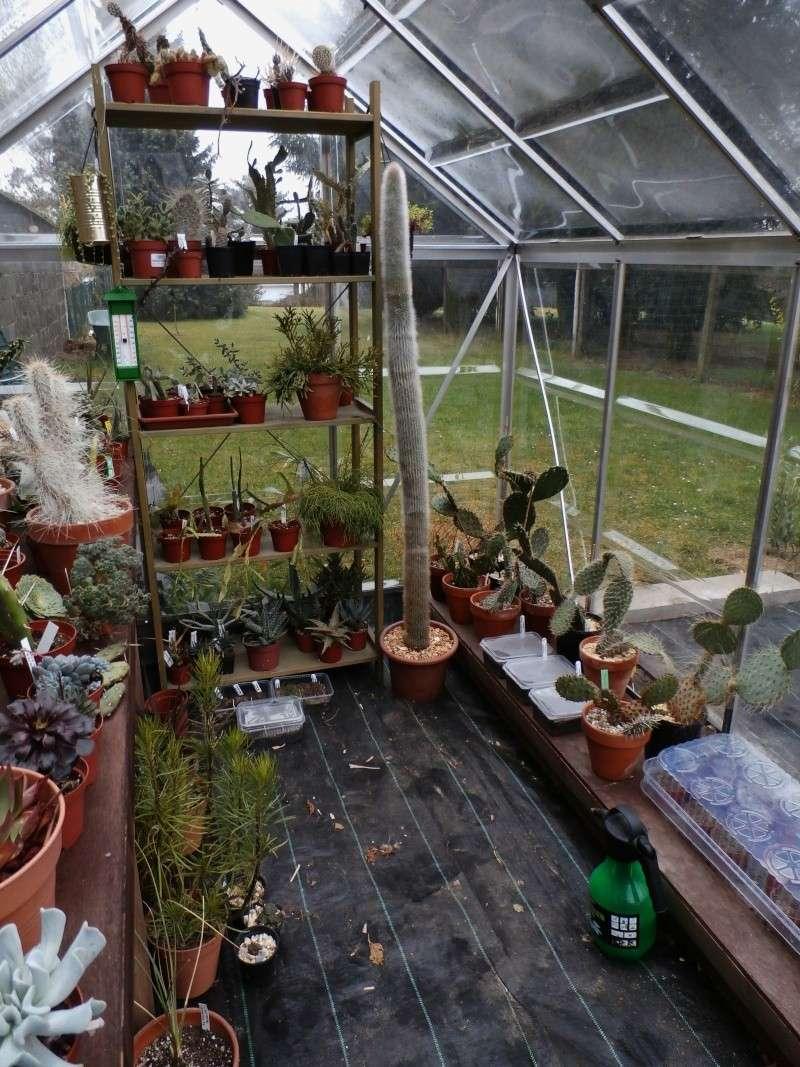 Phyllo - nouveau jardin P3170014