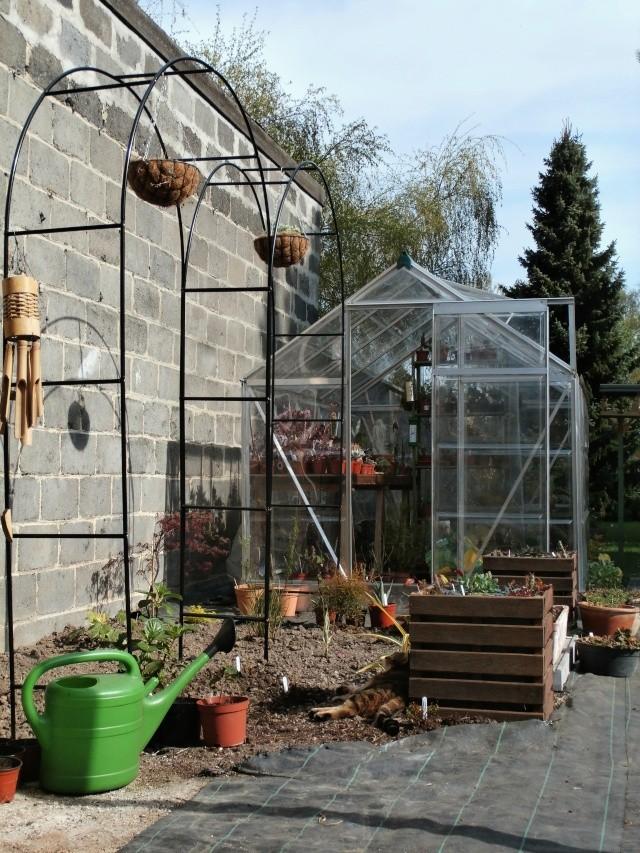 Phyllo - nouveau jardin P4020013