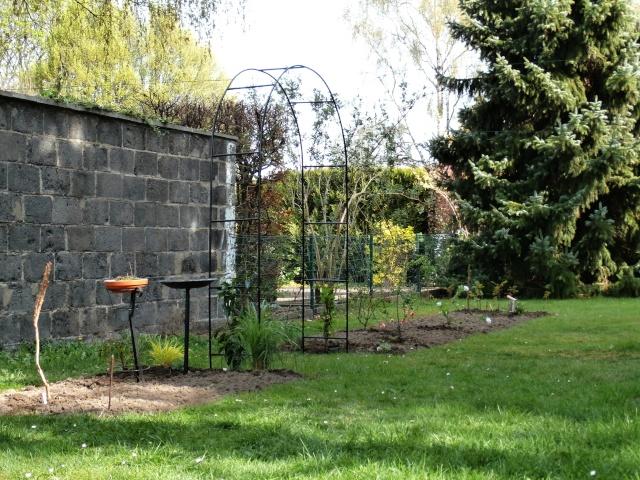 Phyllo - nouveau jardin P4020014