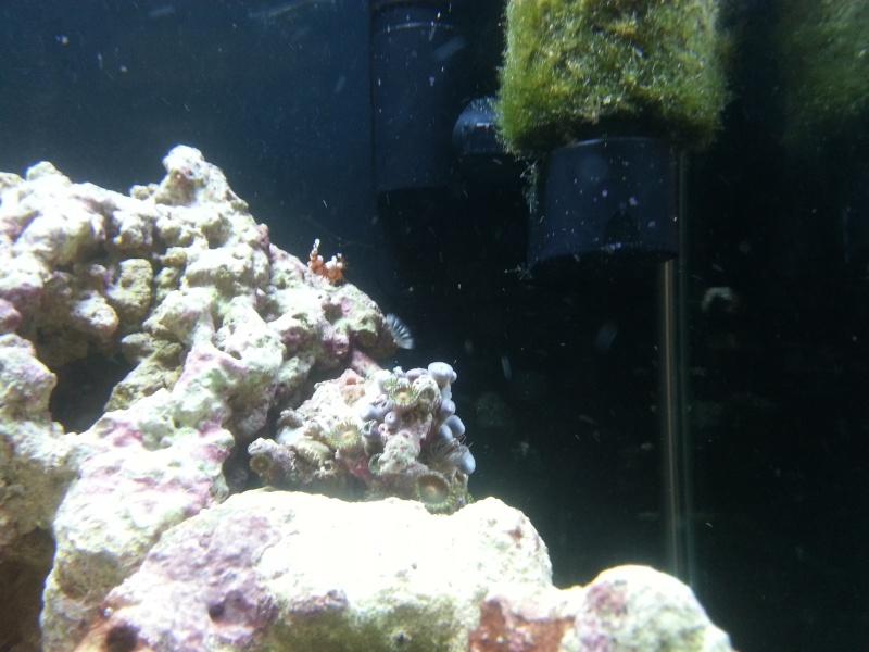 Le crabe au pince d'or 20140312