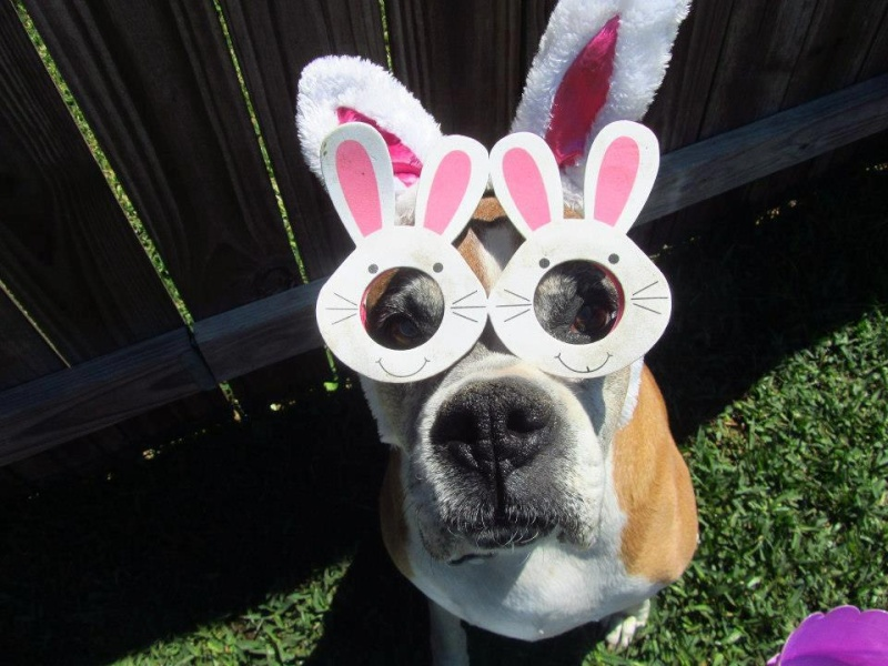 HAPPY EASTER GUYS Boxer11