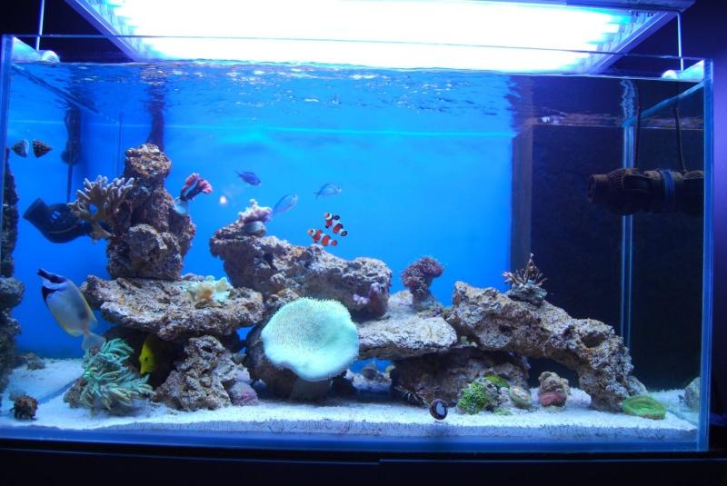 Nico Reef Mon_ba12