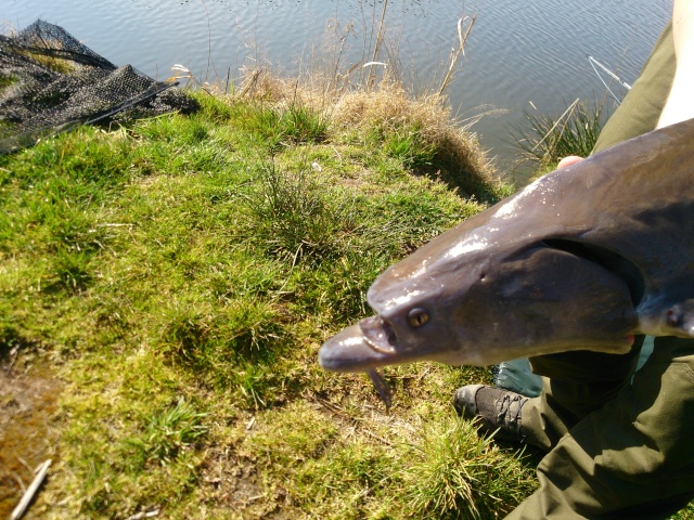 un drôle de poisson Dsc_1011
