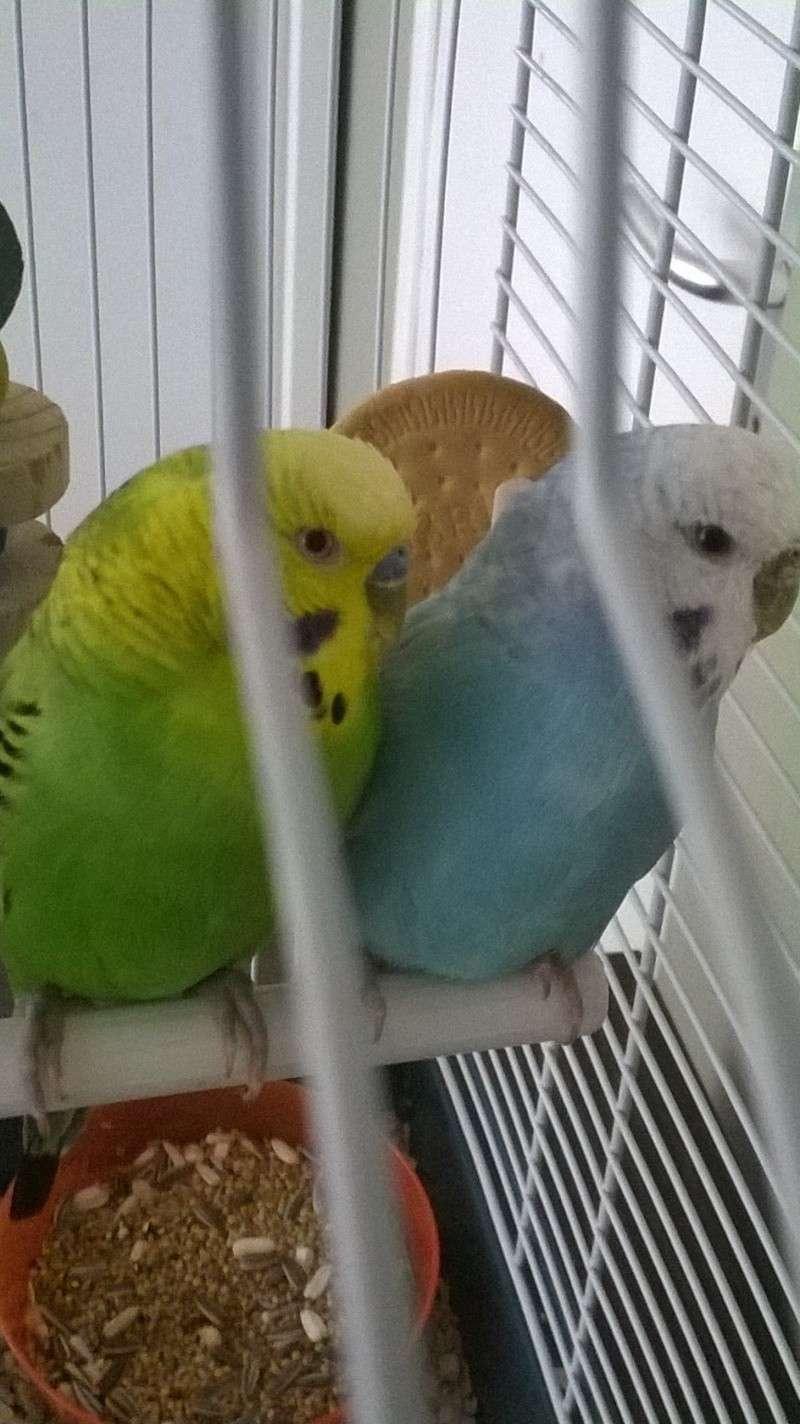 Picolo et Bulma age ? Wp_20139