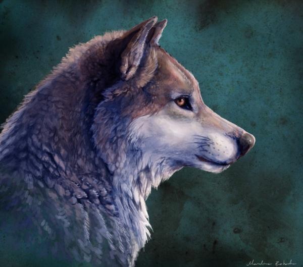 Images de loup ! - Page 2 A_wolf10