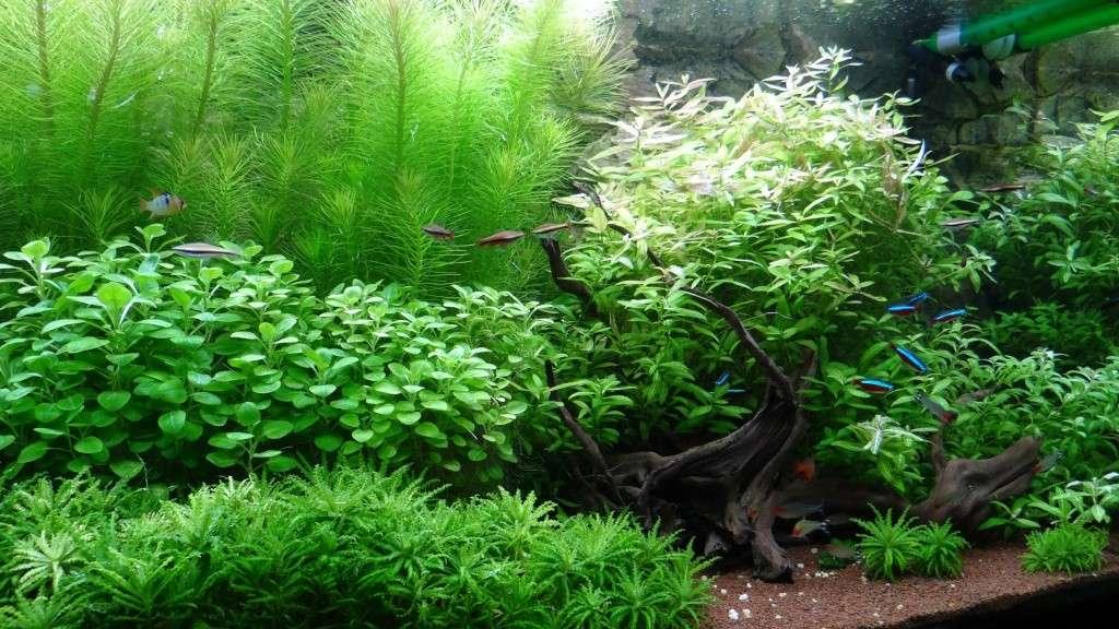 Besoin de conseils pour un nouvel aquarium  - Page 3 Dsc01914