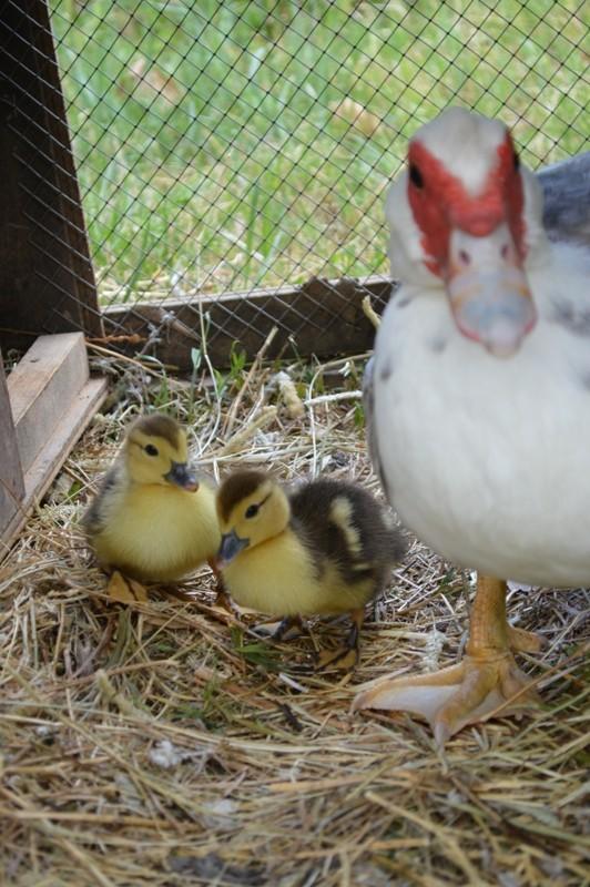 Nos bébés-animaux 2014 Dsc_0029