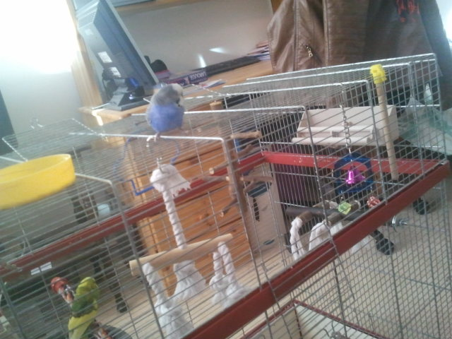 cage pour 2 perruches 208610