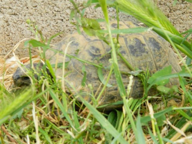 photos de mes tortues Dscn3115