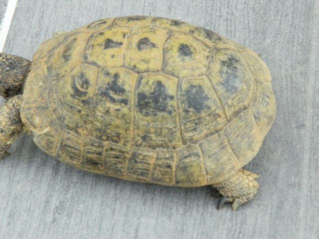 photos de mes tortues Dscn3210