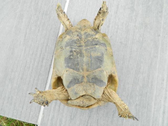 photos de mes tortues Dscn3211