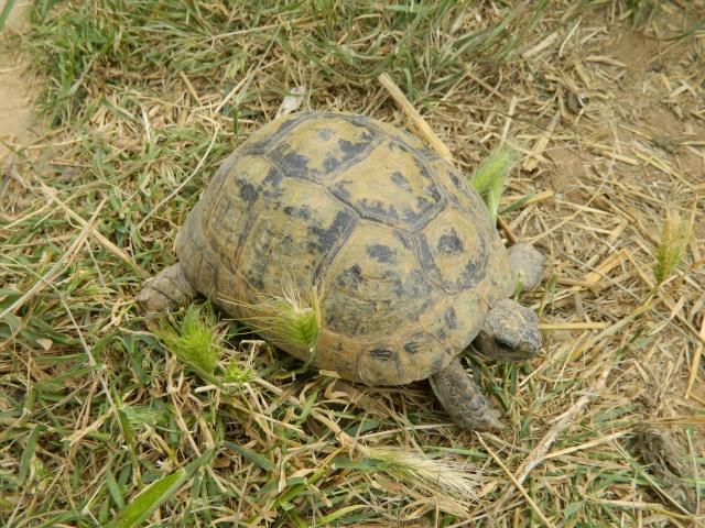 photos de mes tortues Dscn3218