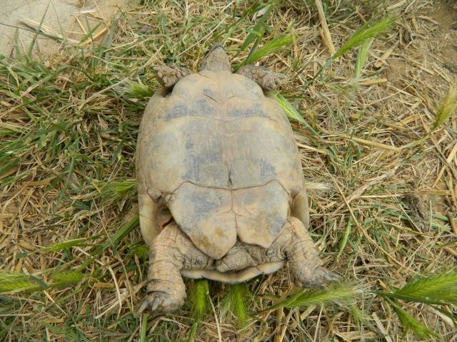 photos de mes tortues Dscn3219
