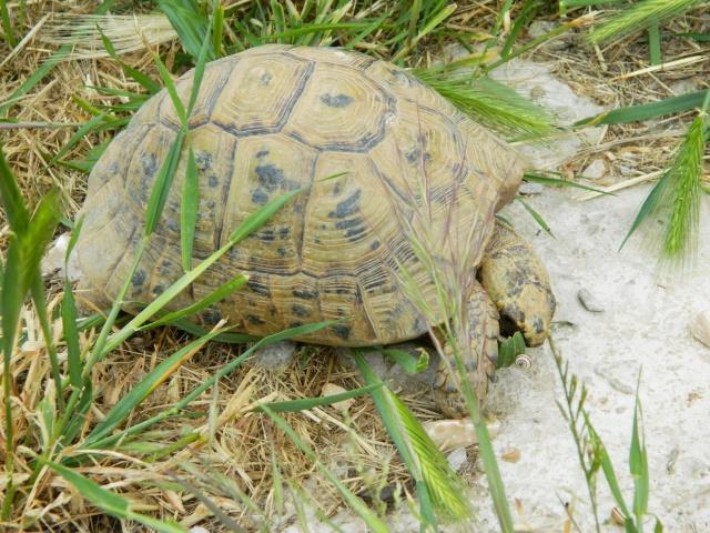 photos de mes tortues Dscn3220