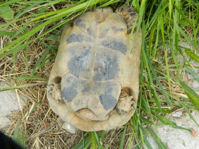 photos de mes tortues Dscn3221