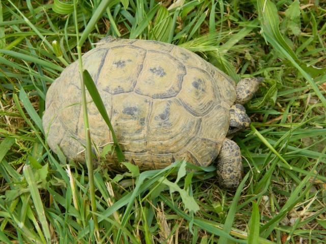 photos de mes tortues Dscn3222