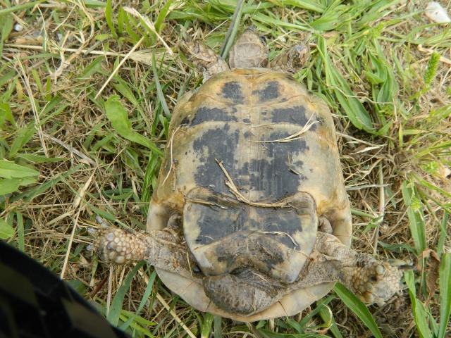 photos de mes tortues Dscn3223