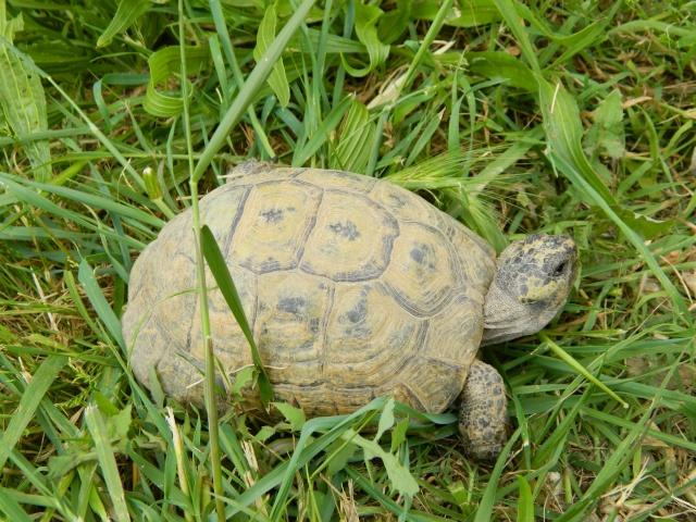 photos de mes tortues Dscn3224