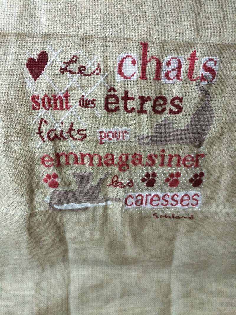Sal LLP les chats - FINI - Page 33 Img_1015