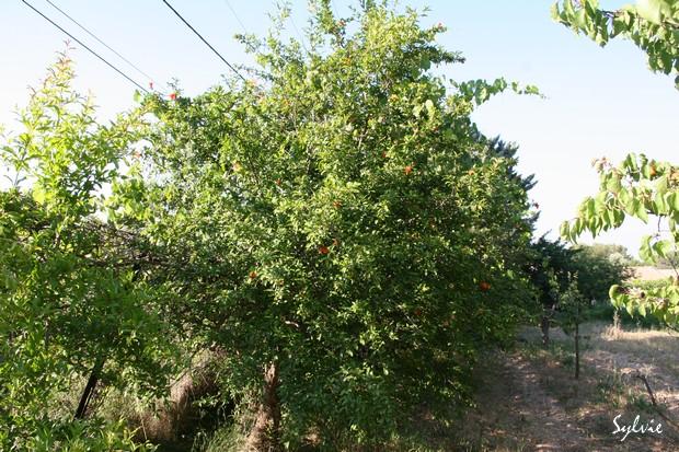 Abres fruitiers ou pas Img_5613