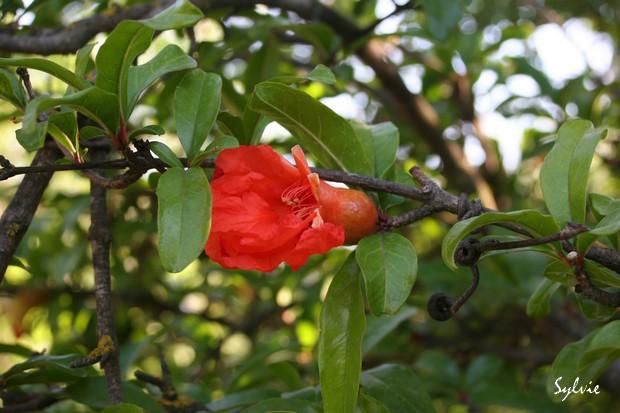 Abres fruitiers ou pas Img_5615