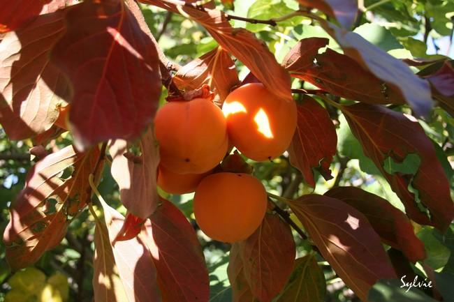 Abres fruitiers ou pas Img_8911