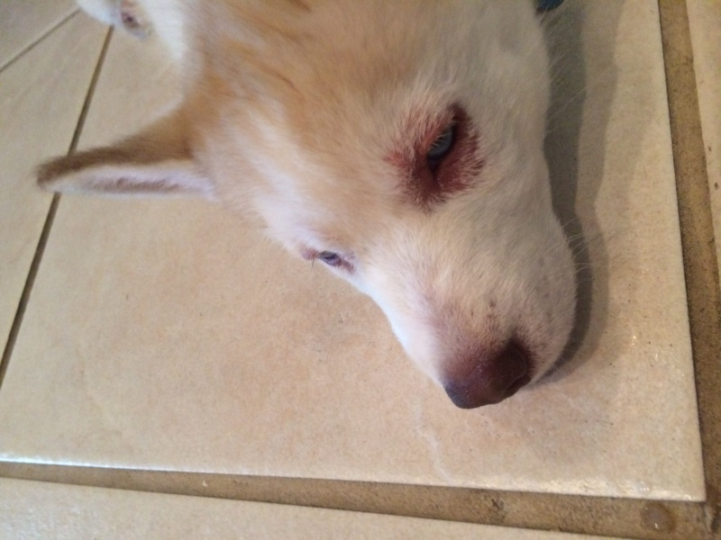 Any experience with remedies for localized demodex Luna_210