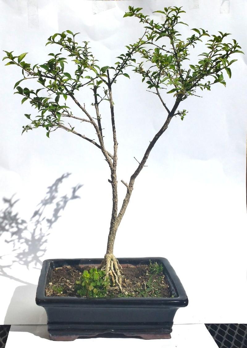 Mystery Tree _tree11