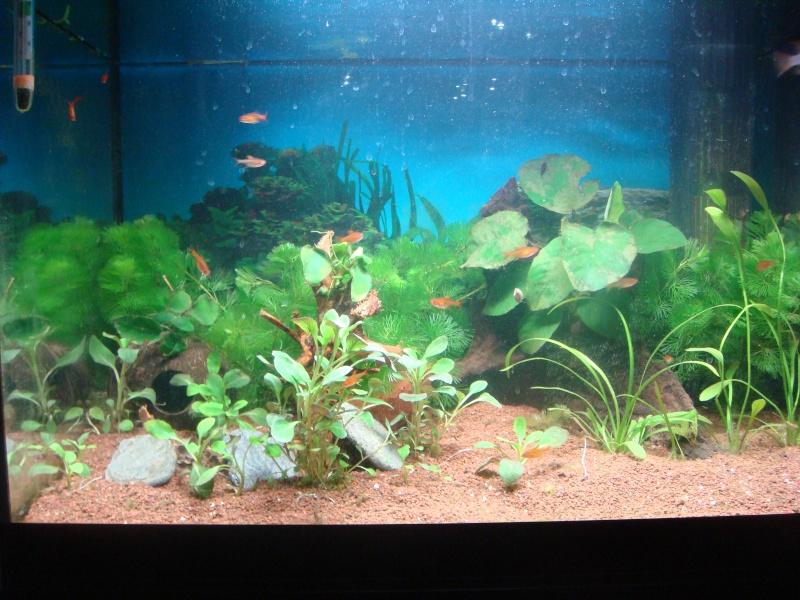 Présentation de mon aquarium Dsc04811