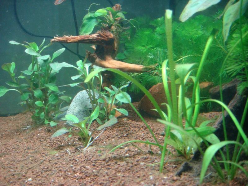 Présentation de mon aquarium Dsc04812