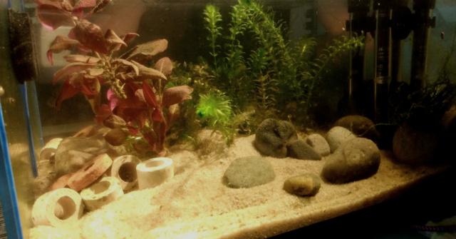 Besoin d'avis sur un nouvel aquarium pour Betta (: Img_2010