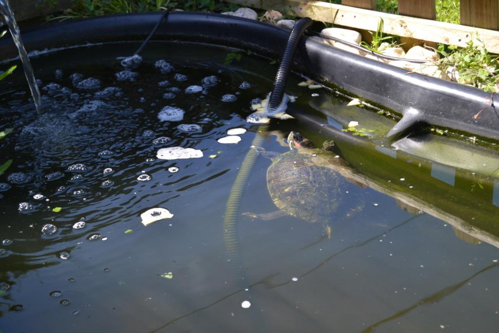 Notre petite faune au jardin.... 00311