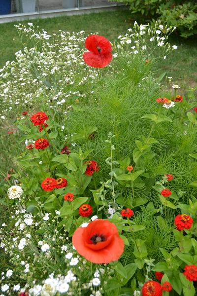 Un petit tour d'horizon de notre jardin...... 003_8019