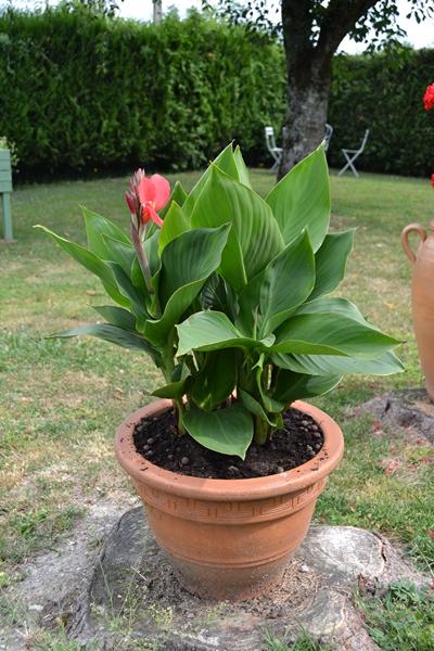 Les plantes en pots au jardin. 007_8014